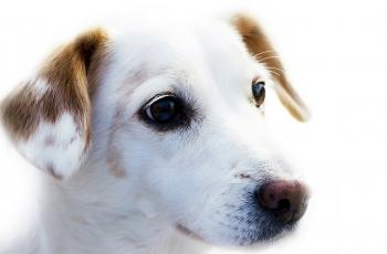 Como se organizar para ter um cão
